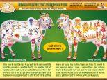 panchgavya gurukulam